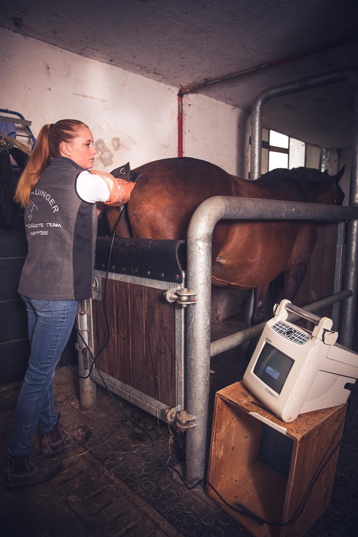 Tierarzt_Mattsee-17
