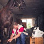 Tierarzt_Mattsee-19