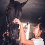 Tierarzt_Mattsee-27