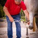 Tierarzt_Mattsee-48