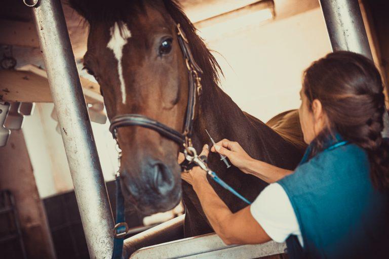 Tierarzt_Mattsee-86
