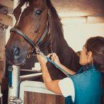 Tierarzt_Mattsee-88