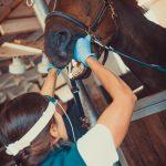 Tierarzt_Mattsee-93