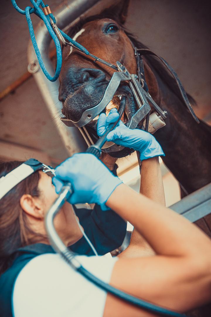 Tierarzt_Mattsee-99